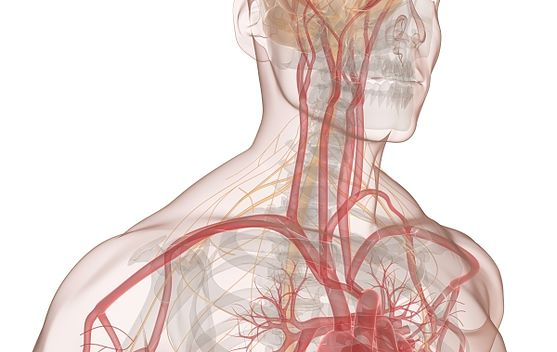 POTS Treatment - POTS Symptoms - Dysautonomia