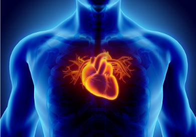 heart 3d rendered - tachycardia